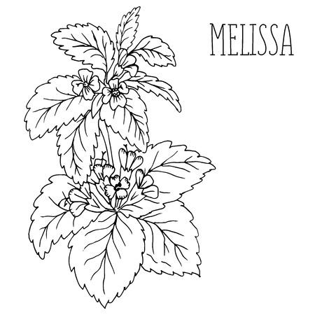 Doodle plants Melissa officinalis plant