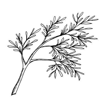 a sprig of dill painted a black outline Illustration