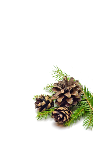 Spruce branches and cones on white background selective focus