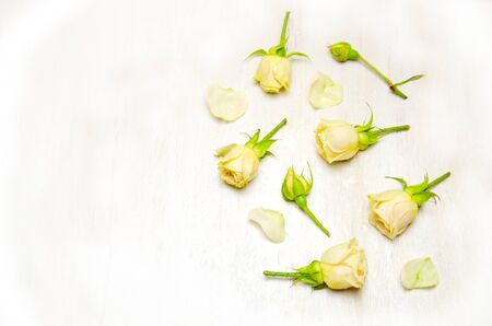 yellow rose buds and petals on a wooden white background with space