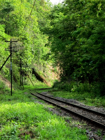 forest railroad: Railroad in forest
