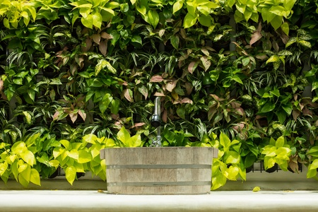 Out door Lavatory and Ornamental plants wall. Stock Photo - 21955261