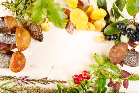 mushrooming: Autumn background with forest mushrooms, herbs, berries and blank space for text