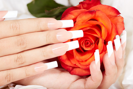 Hands with long artificial french manicured nails and red rose flower