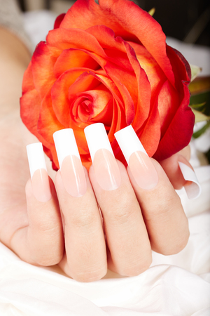 Hand with long artificial french manicured nails and red rose flower Stock Photo