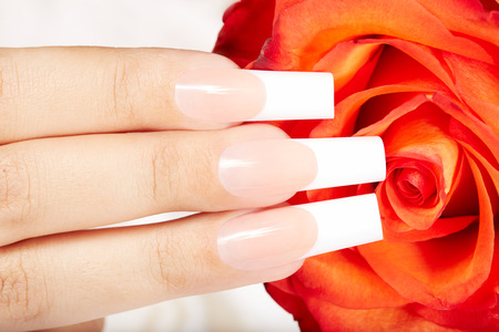 artificial nails: Fingers with long artificial french manicured nails and red rose flower