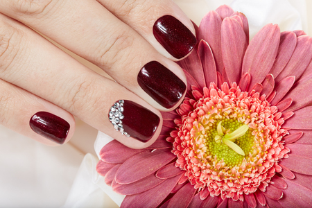 Hand With Short Manicured Nails Colored Dark Purple Nail Polish And Pink Gerbera Flower Stock