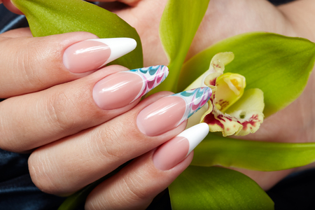 Hand with long artificial french manicured nails holding an orchid flower