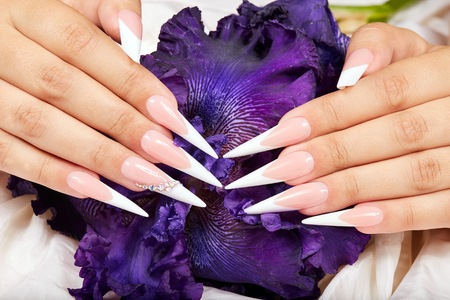 Hands with long artificial french manicured nails and a purple Iris flower Фото со стока