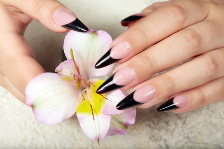 Hands with long artificial black french manicured nails holding a lily flower Foto de archivo - 104204459