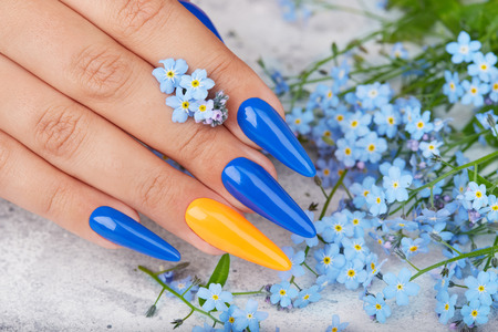 Hand with long artificial manicured nails colored with blue and orange nail polish and forget me not flowers