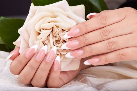 Hands with long artificial french manicured nails holding a beige rose flower Imagens