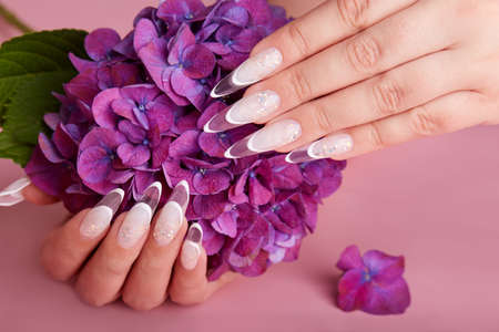 Hands with long artificial french manicured nails and purple Hortensia flower