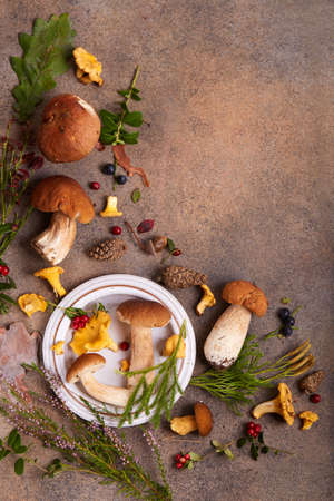 Still life with edible forest mushrooms boletus, chanterelles, birch bolete, berries, cones, leaves and herbs. Blank space for text. Top view.