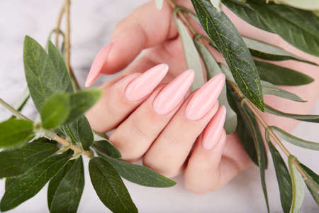 Hand with long artificial manicured nails colored with pink nail polish. Fashion and stylish manicure. Stockfoto
