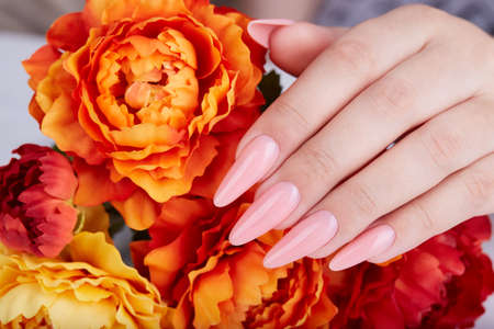 Hand with long artificial manicured nails colored with pink nail polish and orange Aster flowers. Fashion and stylish manicure.