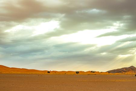 Hamada du Draa, marokańska kamienna pustynia o świcie na pierwszym planie, góry w tle, Maroko