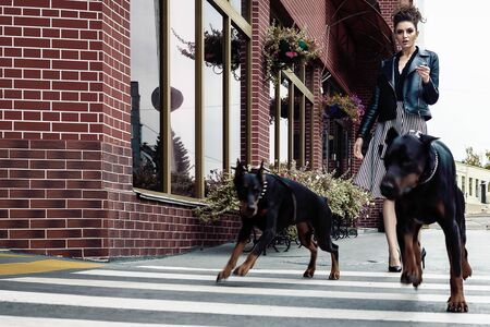 A girl walks along the street in the city along the building with two Dobermans on a leash. She and the dogs cross the road. 写真素材
