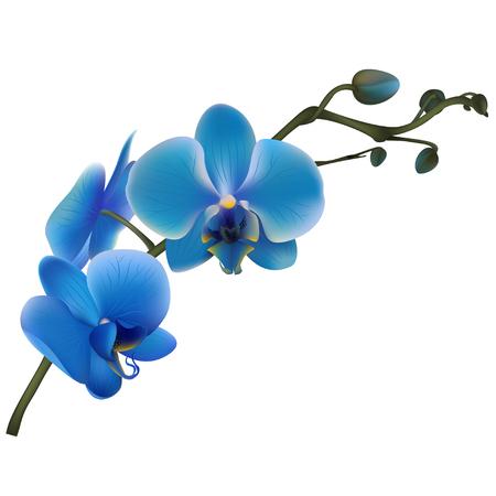 Orquídeas azuis. Flores tropicais. Plantas exóticas. Fundo floral Cartão. Quadro, Armação. Fronteira. Modelo. Ilustración de vector