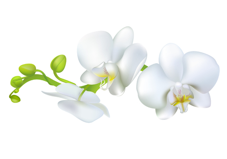 White orchids. Tropical flowers. Exotic plants. Floral background. Card. Frame. Border. Template. Vectores