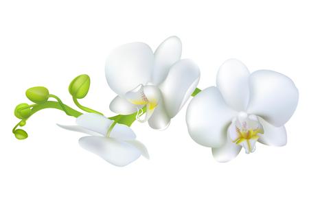 Witte Orchideeën. Tropische bloemen. Exotische planten. Florale achtergrond. Kaart. Frame. Grens. Sjabloon.