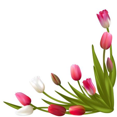 Tulips. Spring flowers. Frame. Border. Floral background. Vector.