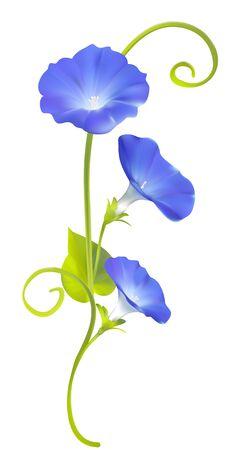 Winde. Winde. Bloemen. Florale achtergrond. Gehaakte planten. Frame. Grens. Kaart. Vector illustratie