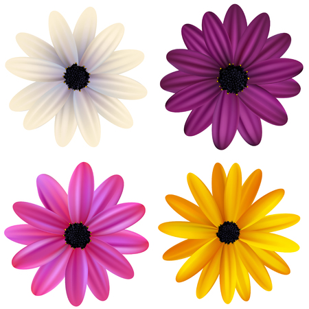 Daisies Floral background Vector illustration.
