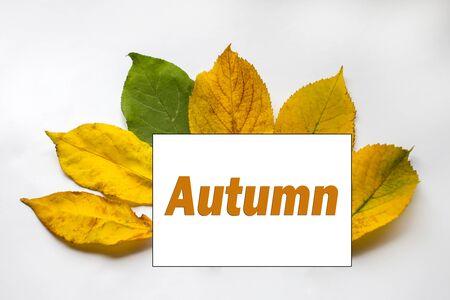 text Autumn. text came spring. autumn background. autumn brown pattern. the word autumn