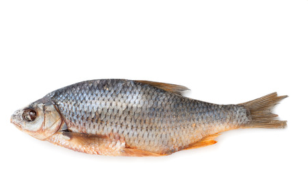 perch dried: Dry roach isolated on white background