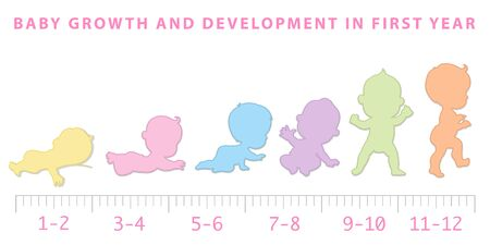 Baby growth from newborn to toddler scale.