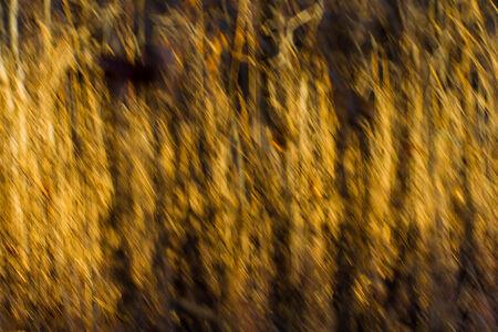 黄金の草の抽象的なフィールド 写真素材