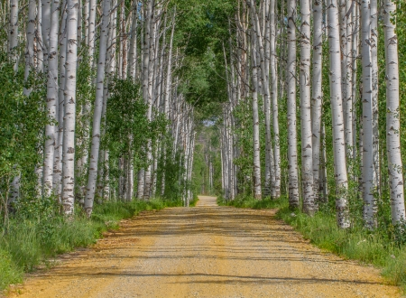 Low contrast shot of Aspen Alley in Wyoming