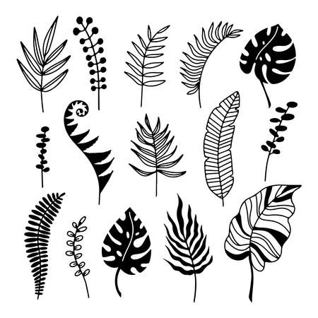 Hand drawn branches set of tropical plants leaves isolated on white background. Outline silhouette vector illustration. Design for pattern, logo, template, banner, posters, invitation, greeting card