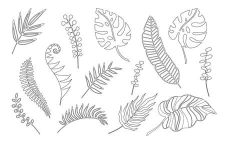 Hand drawn branches set of tropical plants leaves isolated on white background. Outline doodle vector illustration. Design for pattern, template, banner, posters, invitation, greeting card