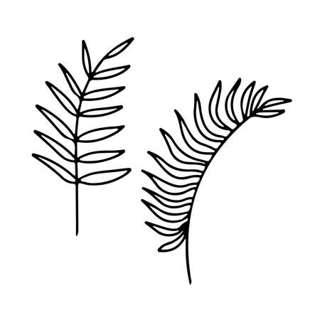 Hand drawn branches set of tropical plants isolated on white background. Outline vector illustration. Design for pattern, template, banner, posters, invitation, greeting card Vettoriali