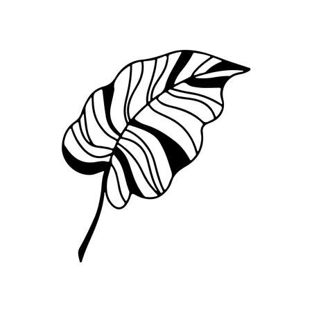 Hand drawn branch of tropical plant leaf isolated on white background. Outline vector illustration. Design for pattern, template, banner, posters, invitation, greeting card Vettoriali