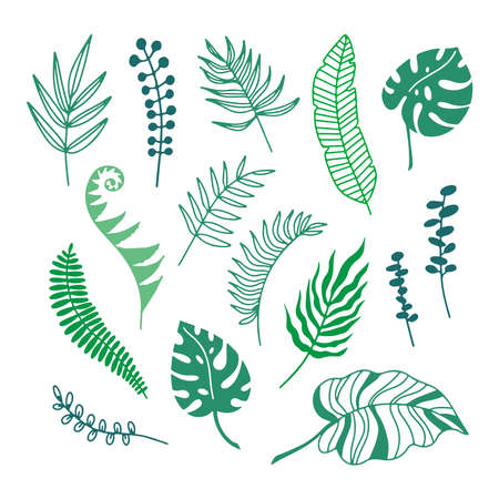 Hand drawn color branches of tropical plants leaves isolated on white background.Outline silhouette vector illustration. Design for pattern, template, banner, posters, invitation, greeting card