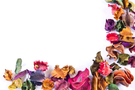 Dried flowers of various kinds  photo