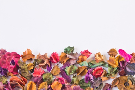 Dried flowers of various kinds. Stock Photo