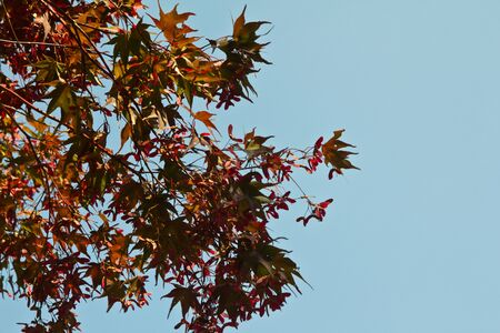 Leaves red, sky background.