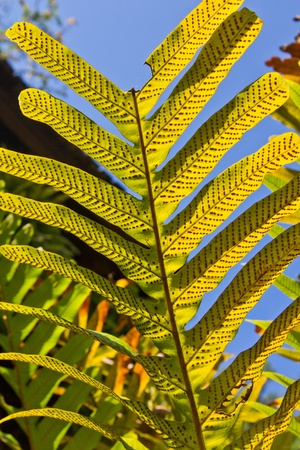 Pattern of yellow leaves, the sun.