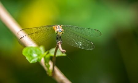 Dragonflies in the garden  Stock Photo