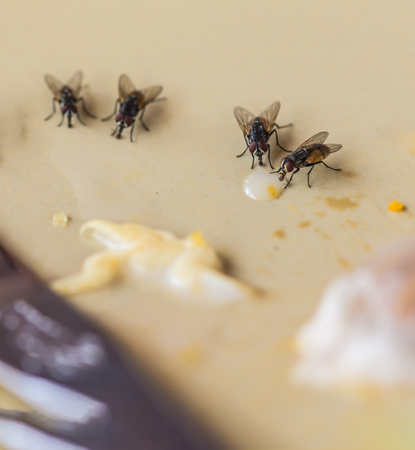 Shoot  the Live house fly, Food waste on the table.on the blurred background and soft focus. Stock Photo