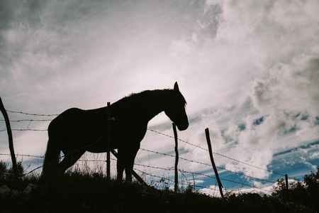 Landscape of a horse against the light with the cloudy sky behind