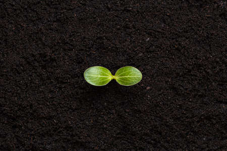 Green sprout on the soil background. New life concept