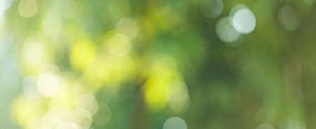 Blurred greenery leaves of tree forest Standard-Bild