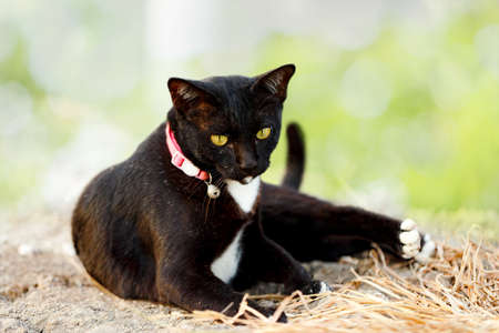 Black cat lying in the garden