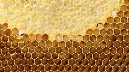 Honeycomb with honey Standard-Bild