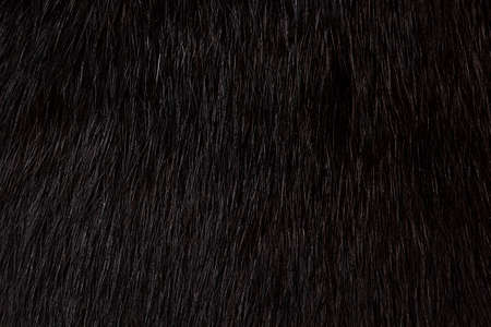 Texture of a black cat's fur